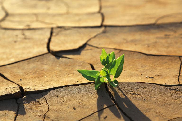 fachtag klima - gruenpflanze waechst in trockenem boden, foto: fotolia, viktor
