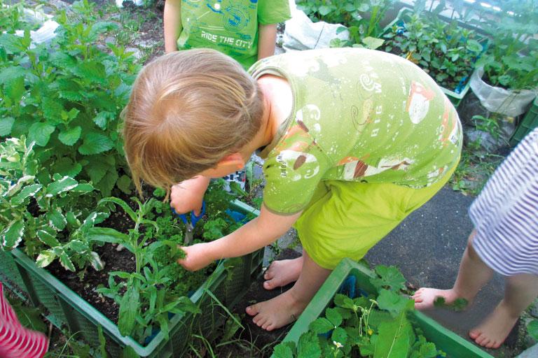 kleiner junge kuemmert sich um kraeuterpflanzen, kita-projekt, foto: paedagogisches institut
