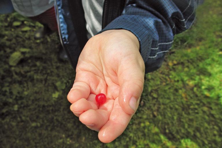 rote johannisbeere in kinderhand, kita-projekt, foto: paedagogisches institut