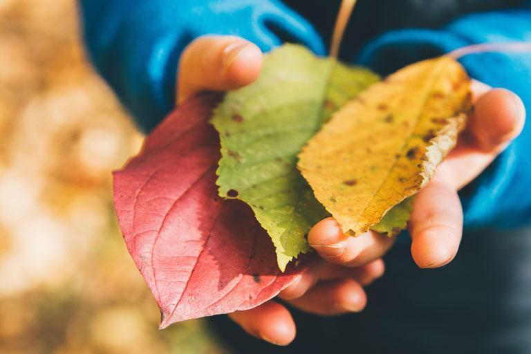 kinderhaende mit herbstlaub, foto: unsplash.com, markus-spiske