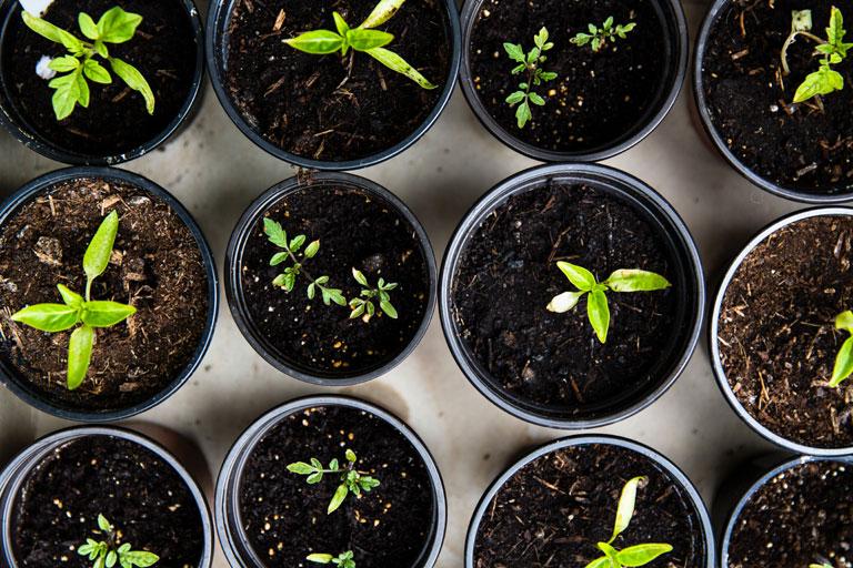 flaenzchen in kleinen blumentoepfen von oben gesehen, foto: unsplash.com, markus-spiske